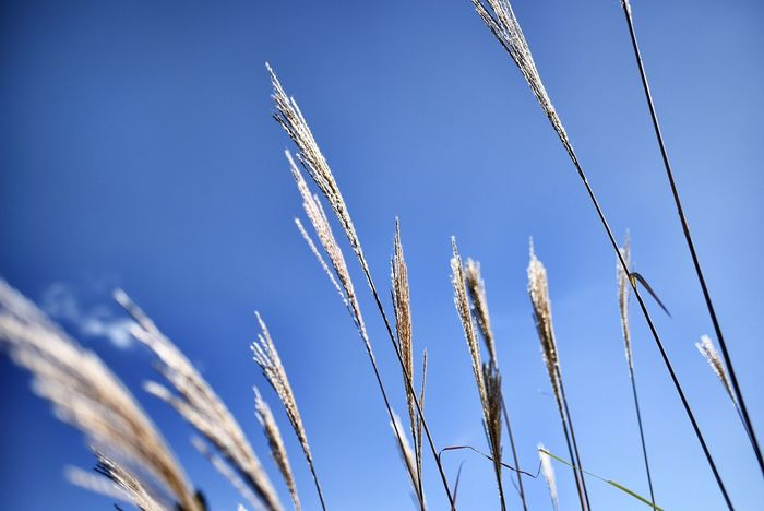 Japanese pampas grass Hello World Taking Photos Enjoying Life Check This Out