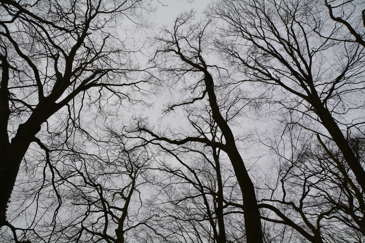 bare tree, branch, low angle view, tree, nature, outdoors, no people, beauty in nature, day, sky