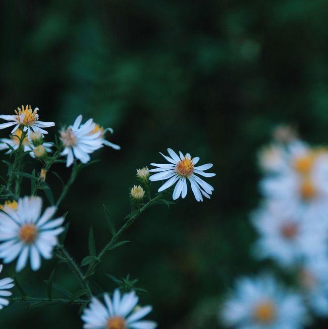 Nature Flores Flowers Beaytiful