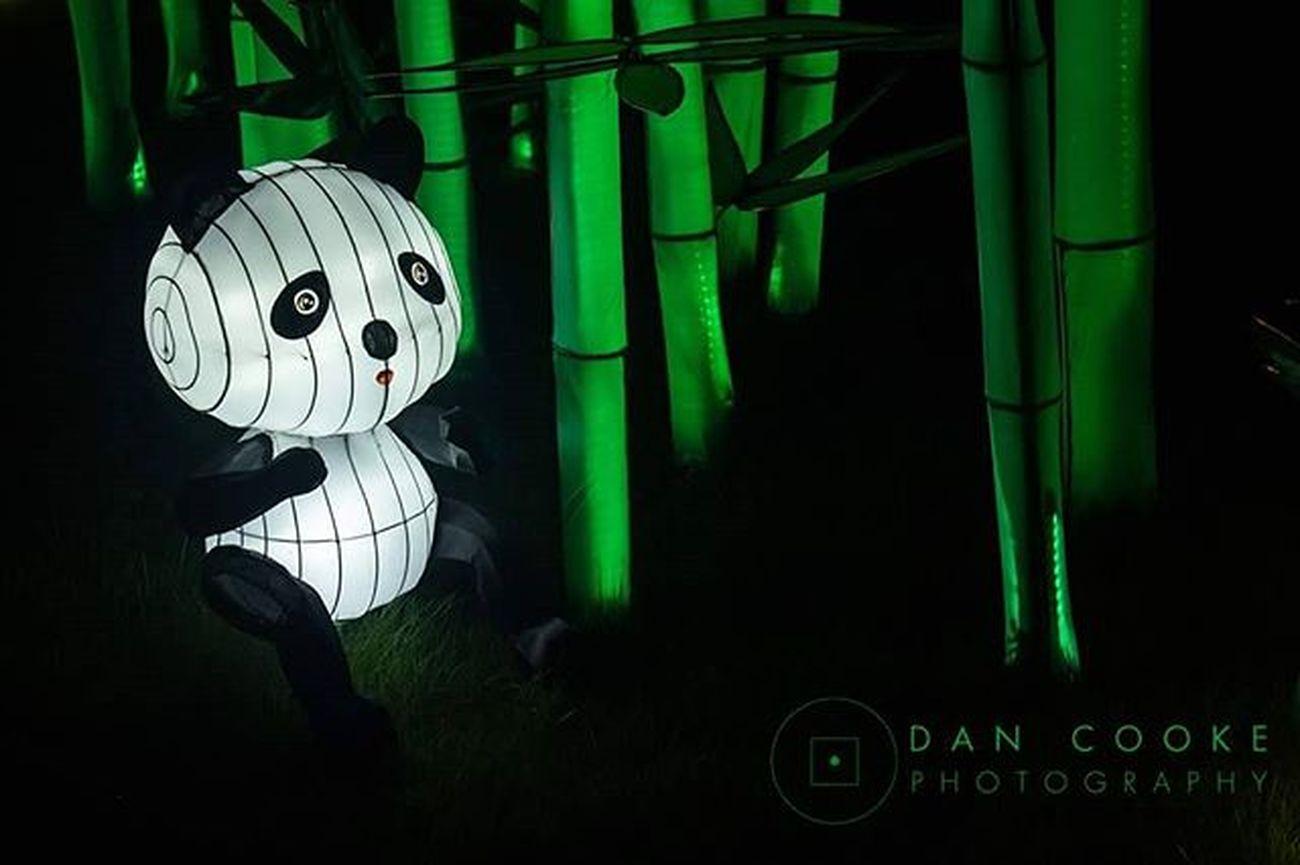 Eats, Shoots and Leaves Longleatsafaripark Festivaloflight Chinese Lantern Panda @longleatofficial