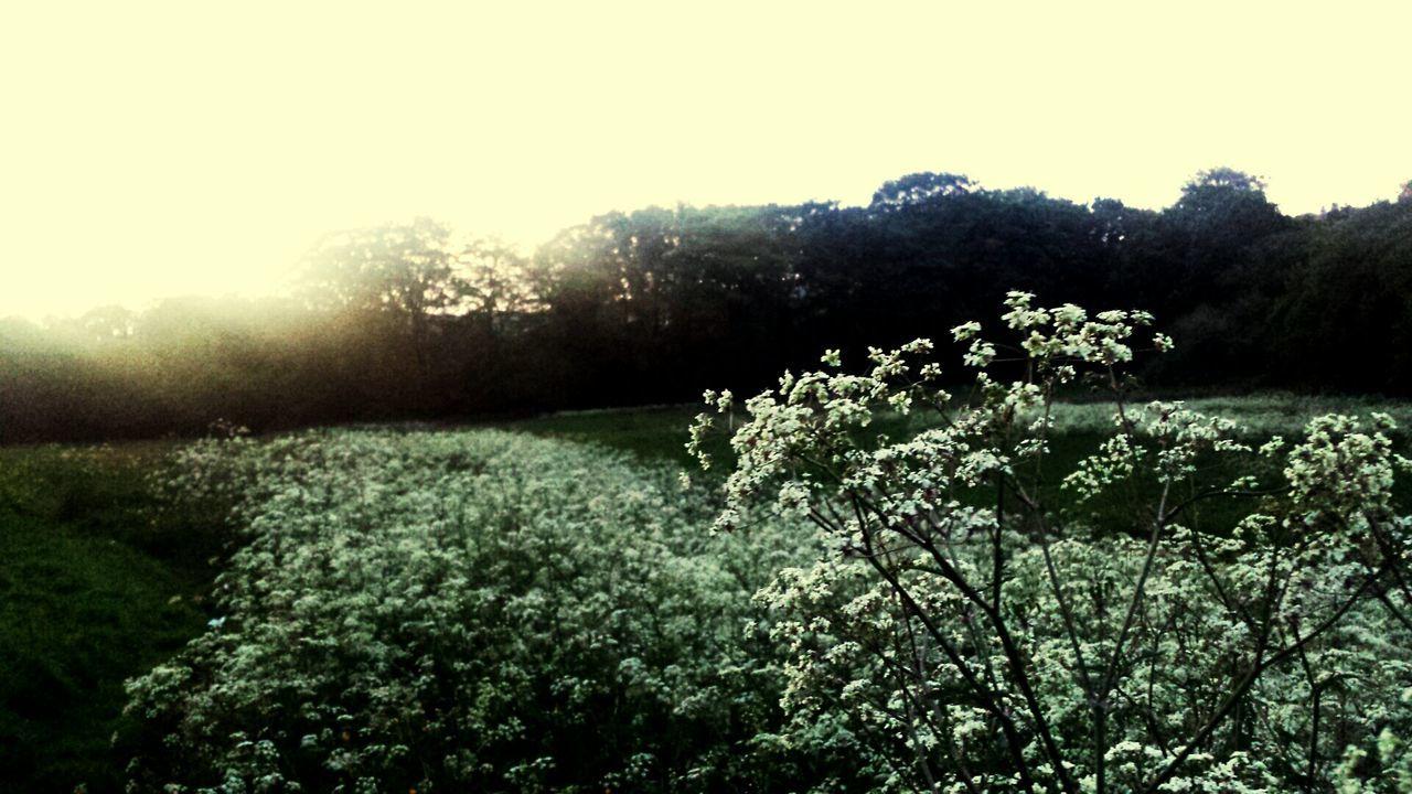 Sunset and flowers Blackburn Sunset
