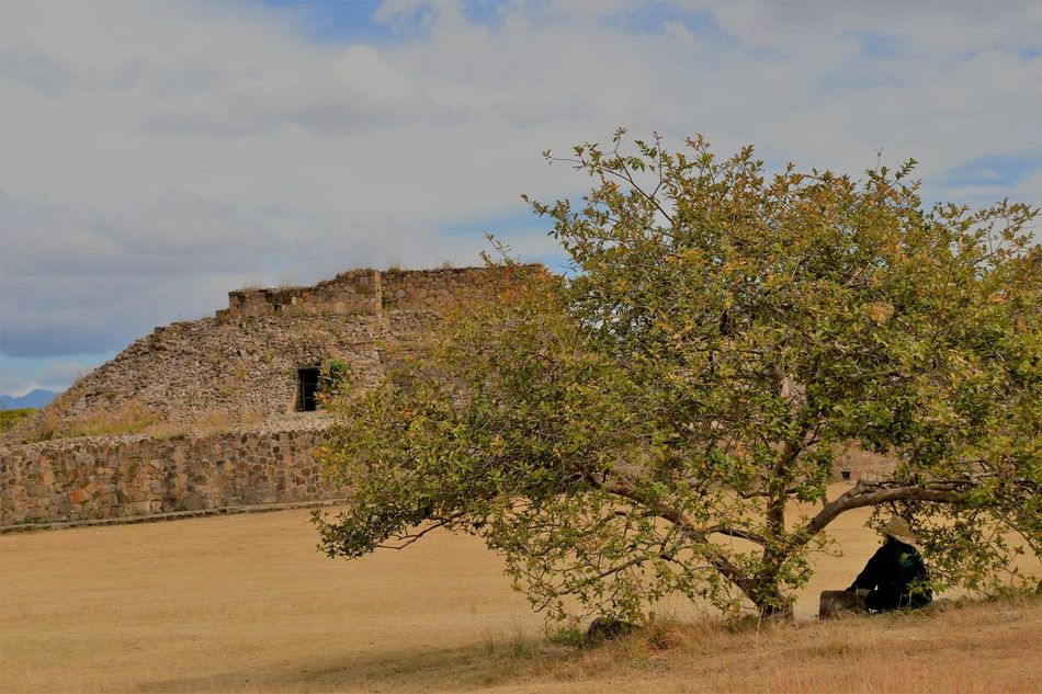 Archaeological Zone Architecture Building Exterior Built Structure Day History Monte Alban Nature Travel Destinations Tree