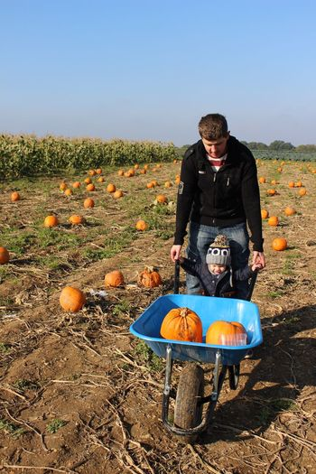 Pumpkin Field Day Fruit Food Outdoors Autumn Real People Rural Scene Clear Sky Halloween Sky Landscape Food And Drink Nature Freshness father son Playing Childhood