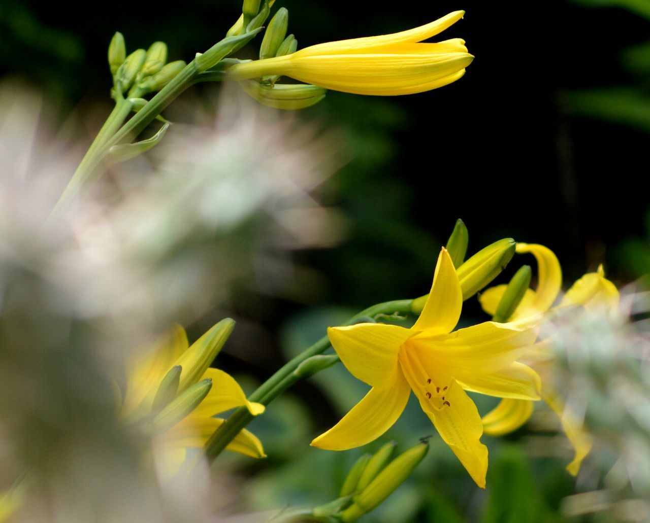 flower, yellow, petal, freshness, fragility, flower head, growth, close-up, beauty in nature, plant, focus on foreground, nature, blooming, stem, pollen, in bloom, blossom, selective focus, leaf, outdoors