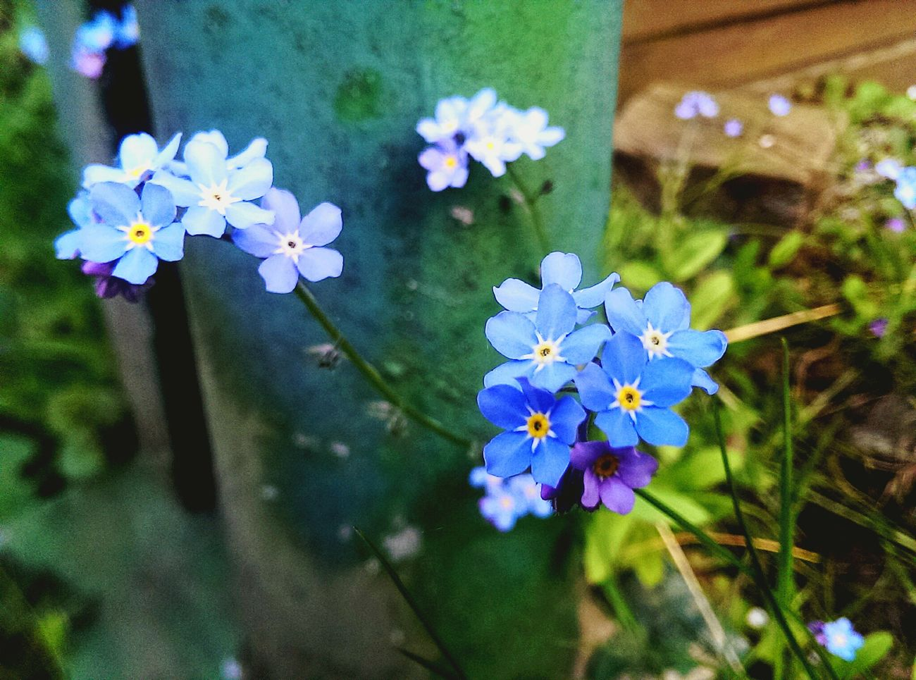 Nahaufnahme Flower Blue Blumen Nature Naturelovers Blau EyeEm Nature Lover