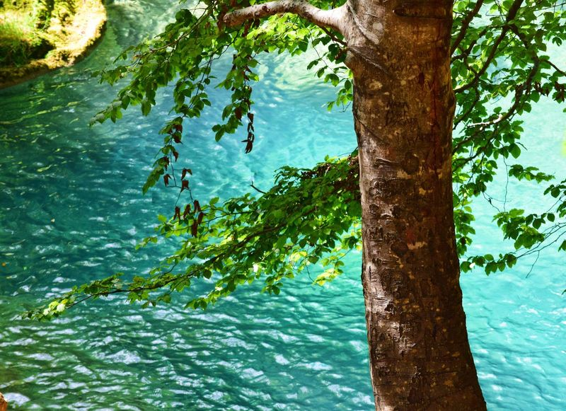 Tree Water Tree Trunk Nature Beauty In Nature Outdoors Day Growth Tranquility Green Color Leaf No People Branch Scenics Swimming Rippled Reflection River Urederra Navarra