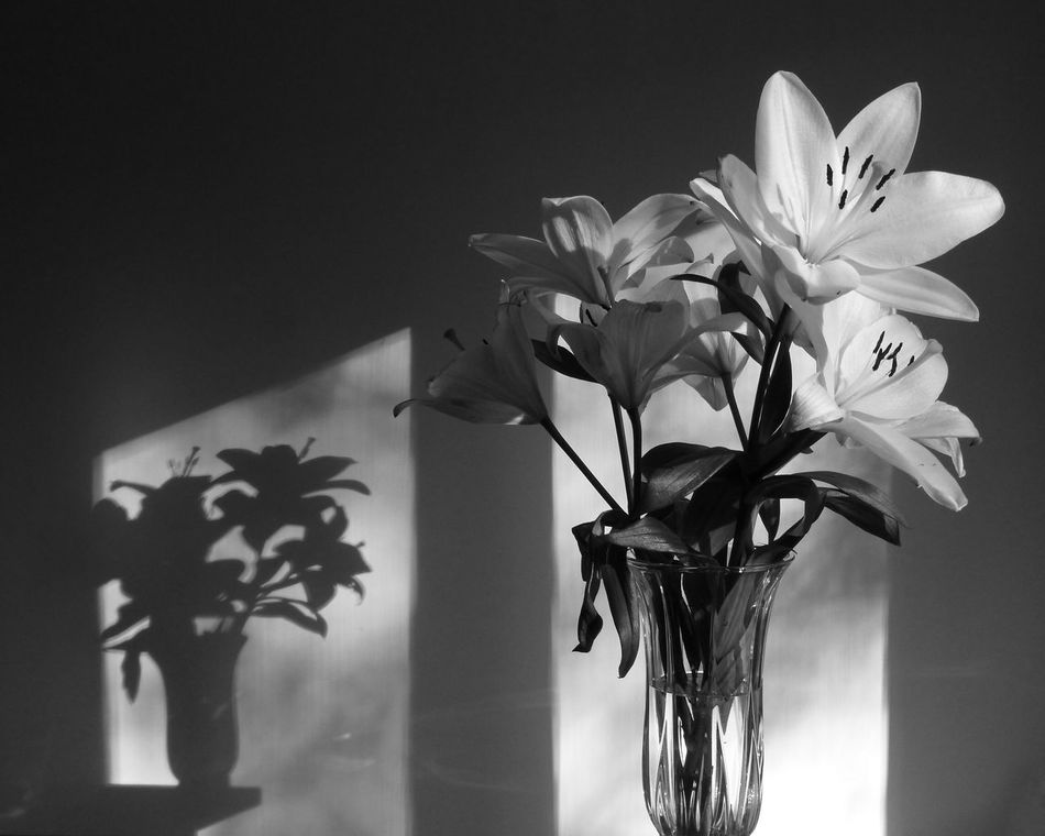 Lilies on the edge. The vase of lilies looks nice in the light entering through the window, until you realize from the vase shadow that it is perched precariously on the edge. In many cases, we miss the shadow of a person and his/her mental torment until it escalates to a suicide or a mental breakdown. Please contact me directly if you have any enquiries about purchasing or licensing this photo. Beauty In Nature Close-up Edge Edge Of The World Edgephotography Flower Flower Head Fragility Indoors  Lilies Lily Mentalhealth  Monochrome Night No People Plant Shades Of Grey Shadow Shadows & Lights Suicide TCPM