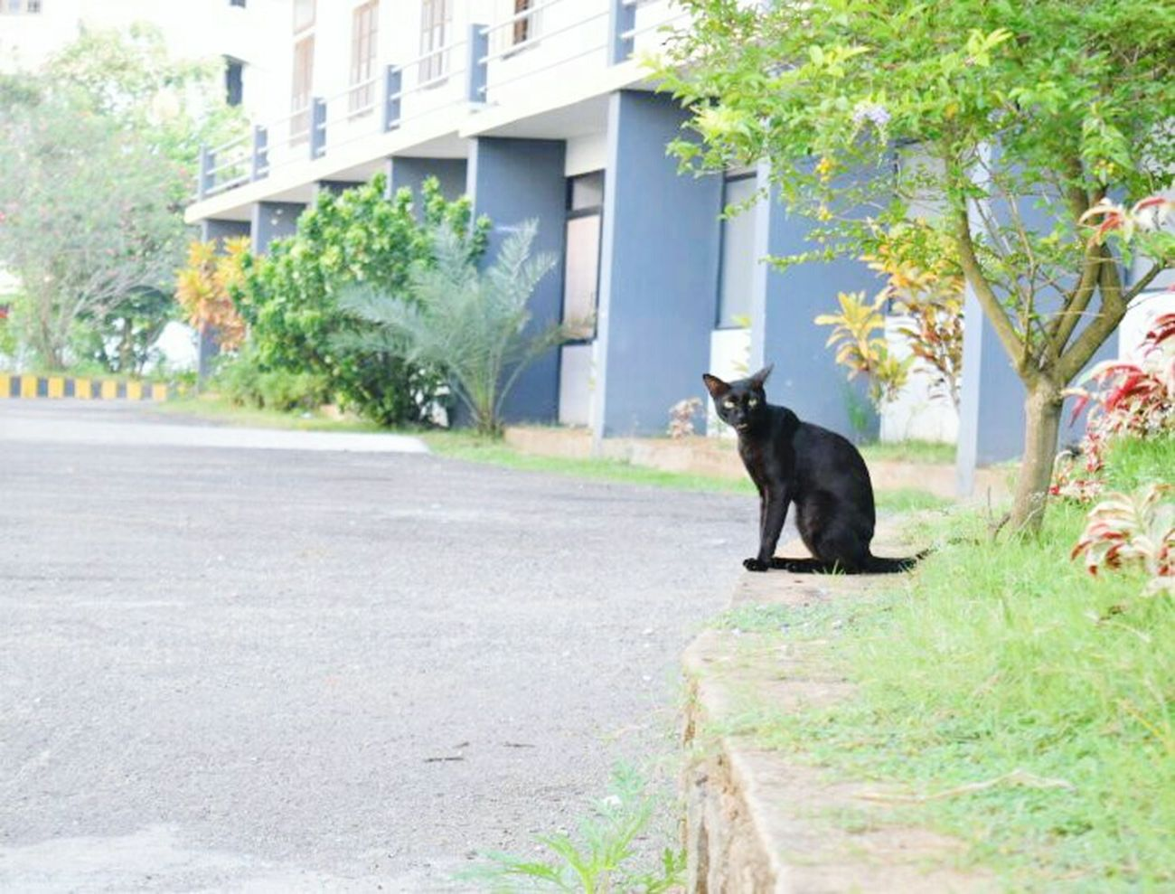 One Animal Animal Outdoors Mammal Road Pets No People Dog Domestic Cat Animal Themes Day Tree Nature Blackcatlove BLackCat