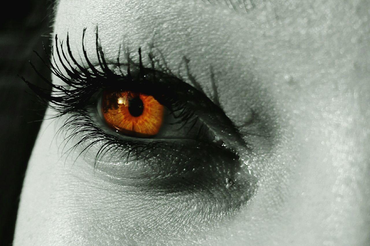 human eye, sensory perception, one person, close-up, real people, eyeball, eyesight, eyelash, human body part, iris - eye, outdoors, portrait, animal themes, day, mammal, people