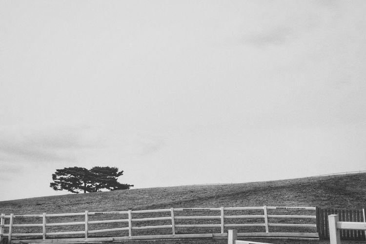 Tree No People Sky Nature Outdoors Fence Plain Empty Farm Eyemnaturelover Landscape Eyemphotography Eyemgallery Canon Canonphotography Canon77d Monochrome