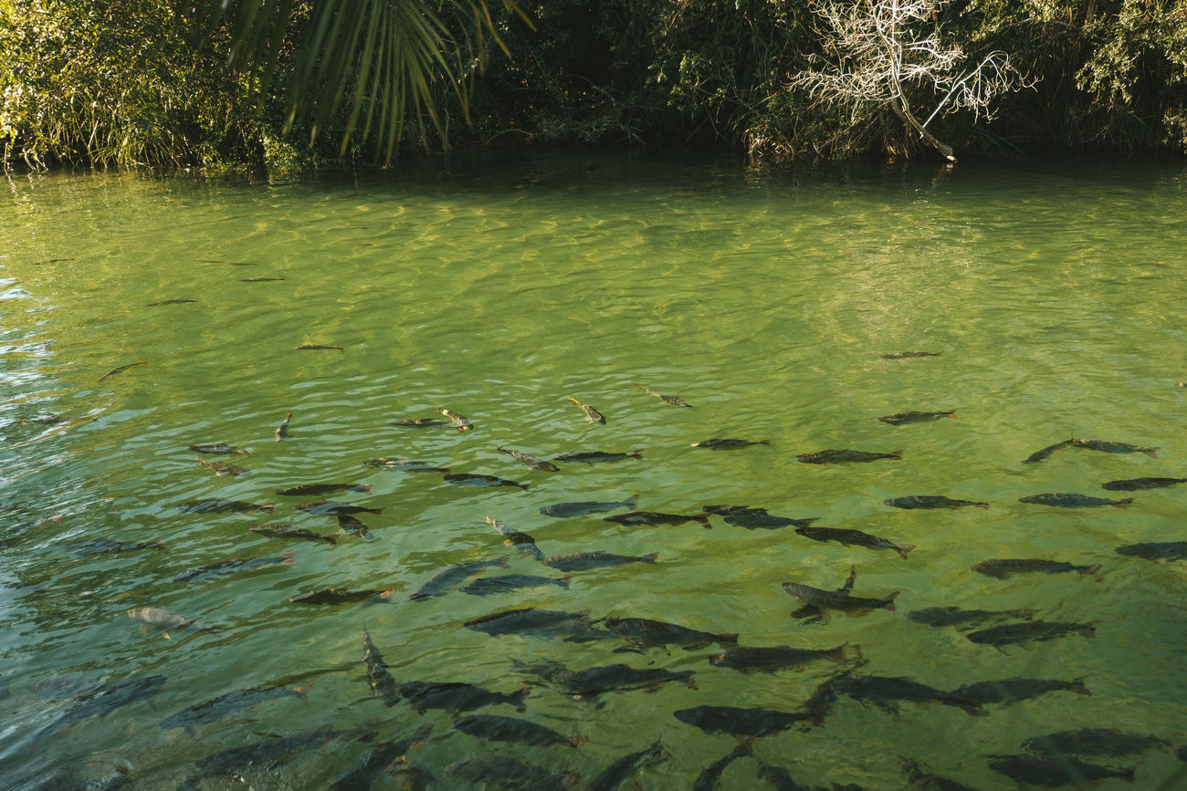 Animal Themes Balneario Municipal Beauty In Nature Bonito Brazil Clear Water Crystal Clear Waters Fishes Formoso River Lake Landscape Large Group Of Animals Mato Grosso Do Sul Nature Nature No People Outdoors Tranquility Transparent Water