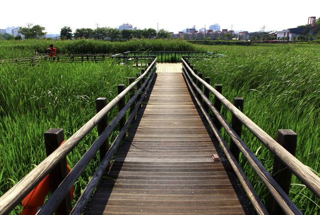 Absence Botanical Garden Composition Connection Diminishing Perspective Empty Fence Fences Footbridge Grass Leading Long Narrow Perspective Railing Staircase Stairs Steps Steps And Staircases The Way Forward Vanishing Point Walkway Walkwaywhy Wood Wooden Path