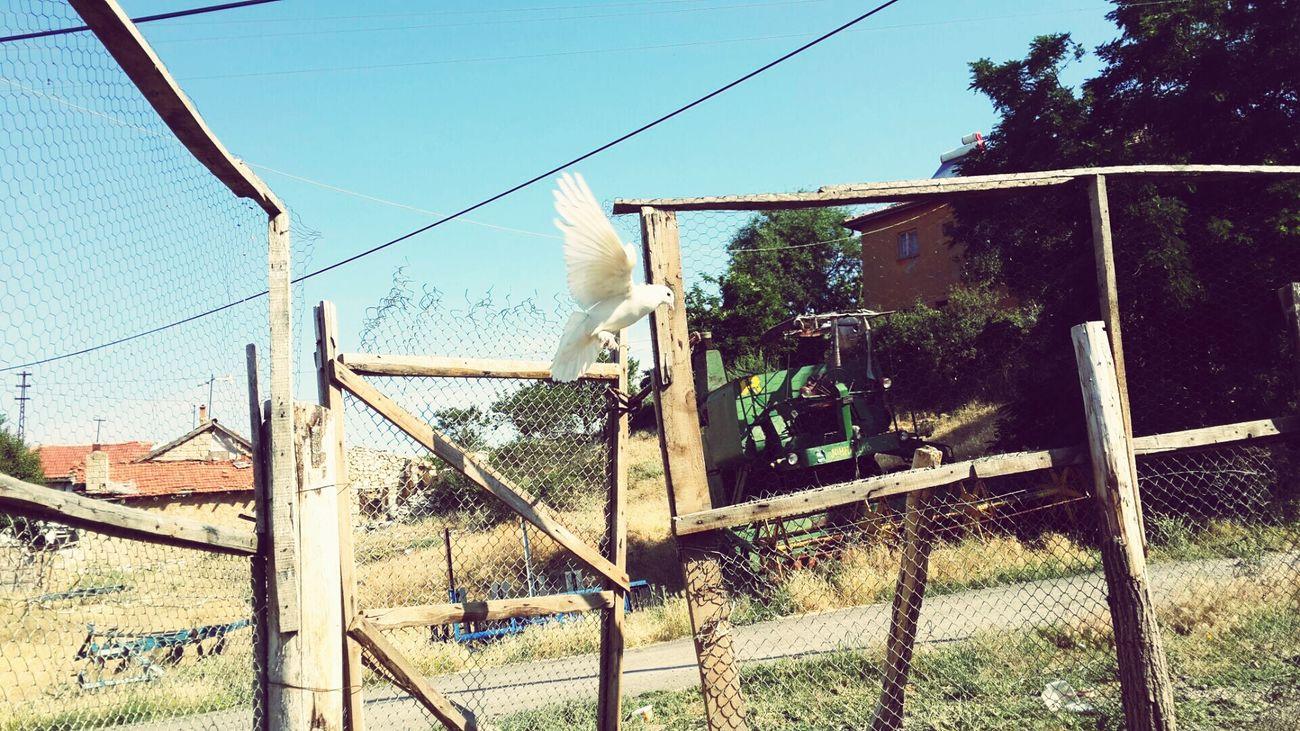 Birds White Fly Instagram Facebook Retrica Powercam :)