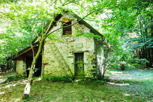 House in the forest Taking Photos Forest EyeEm Best Shots Open Edit Fresh 3 Eye4photography  Nature Photography Nature_collection Beauty Of Decay Adventure Club Tree_collection