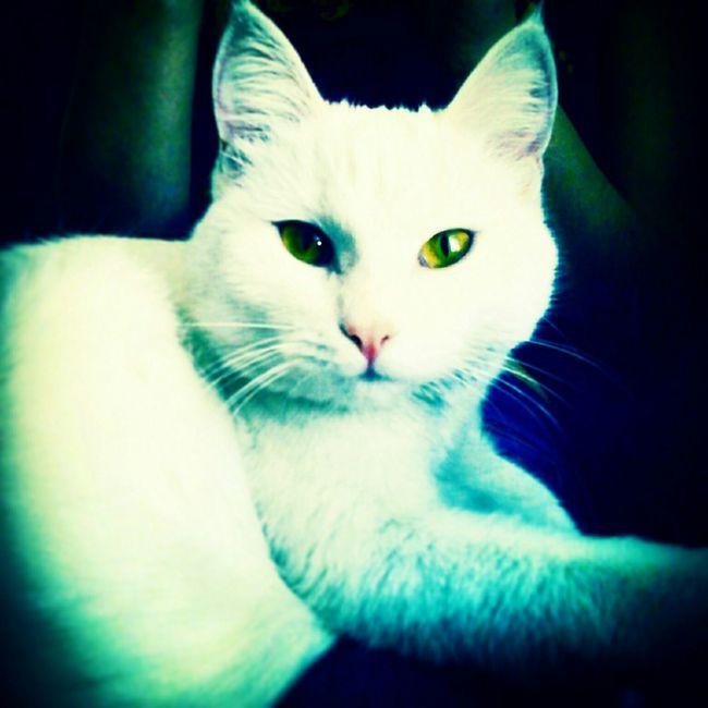 My Little Cat☺ Cat