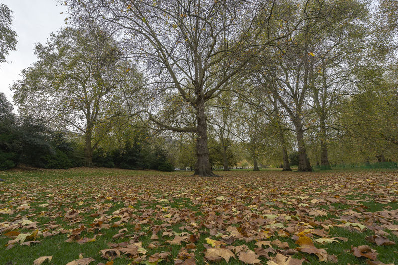 Leaf colors Autumn Autumnal Colours Bare Tree Beauty In Nature Change Day Forest Growth Hyde Park Hyde Park, London Landscape Leaf Leafs Leafs Colors London Nature No People Outdoors Scenics Sky Tranquility Tree