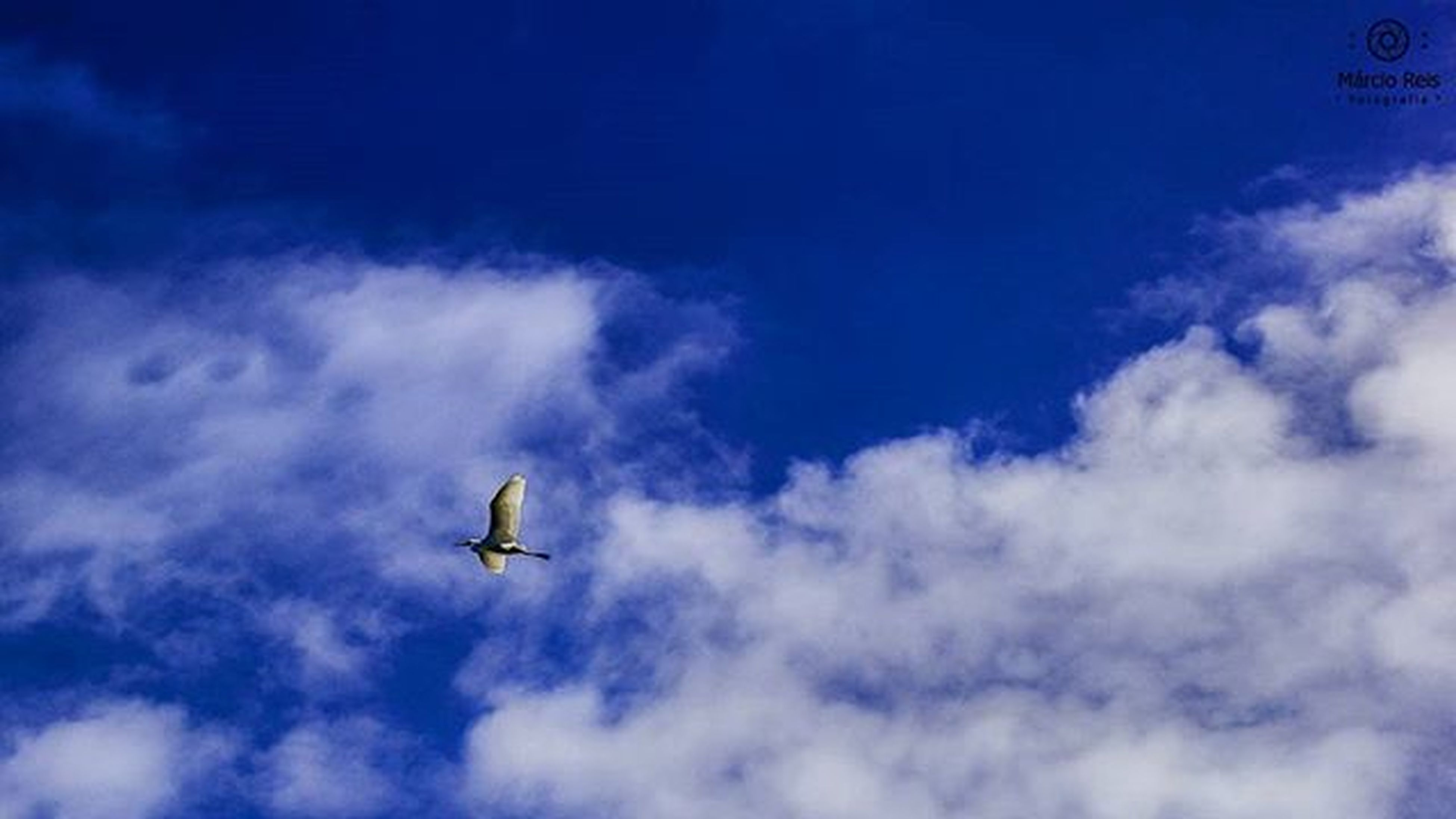flying, low angle view, mid-air, sky, airplane, transportation, air vehicle, cloud - sky, blue, mode of transport, on the move, cloud, nature, cloudy, motion, day, outdoors, wildlife, travel, journey