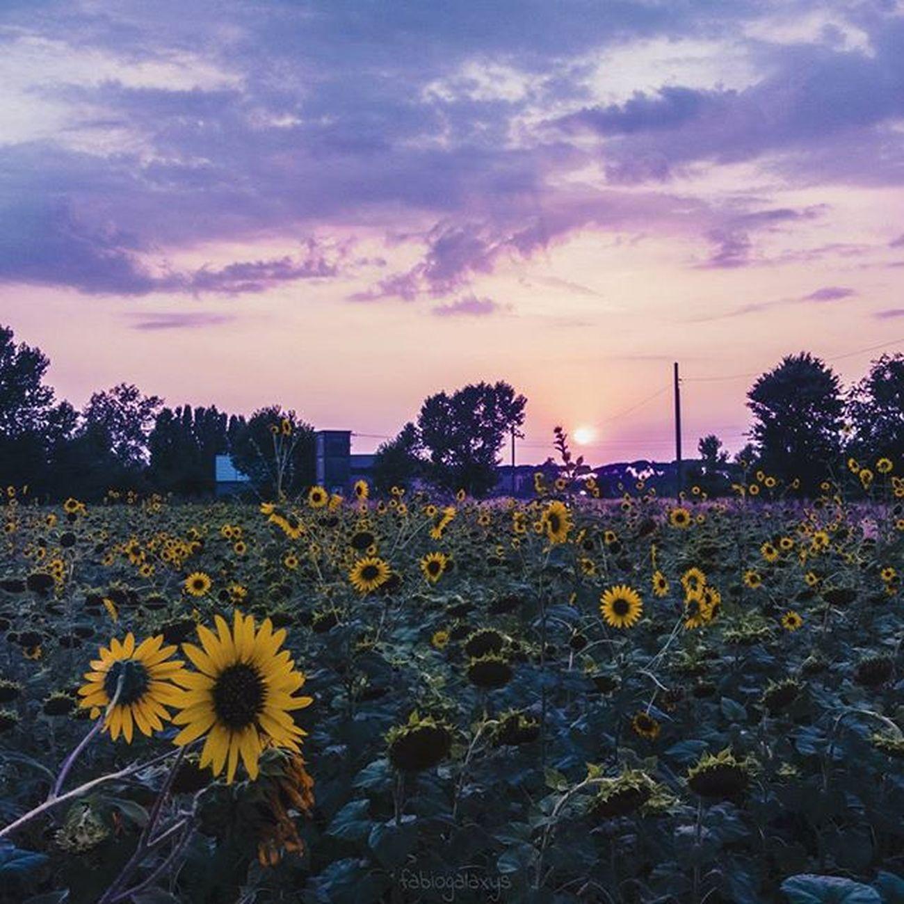 È sera, ed è tempo che i fiori chiudano le loro corolle. Lascia che mi sieda al tuo fianco e comanda alle mie labbra di fare ciò che si può fare in silenzio nella debole luce delle stelle.. 🌻 _________________________________ Tramonti__italiani Ig_energy_group Ig_energy Ig_eurasia euro_shotz mood_family ️ig_cosmopolitan vivo_italia ig_worldclub ig_serenity instaitalia igworldclub ig_europe ig_mood volgolazio awesomeshotz Super_Europe world_bestsunset IGSpecialist KINGS_LUXURY igpodium latinascalo sabaudia sermoneta
