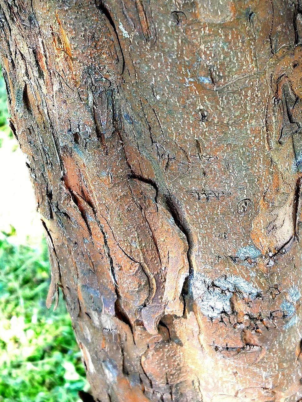 tree, tree trunk, close-up, nature, no people, rough, textured, day, outdoors