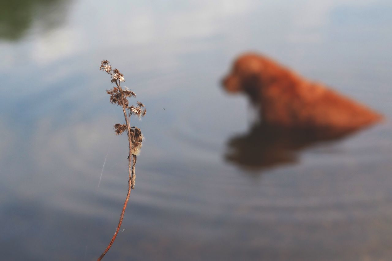 Nature No People Beauty In Nature Day Water Plant Close-up Outdoors Animal Themes Fragility Cotton Plant Beauty In Nature Fujifilm_xseries EyeEm Best Shots