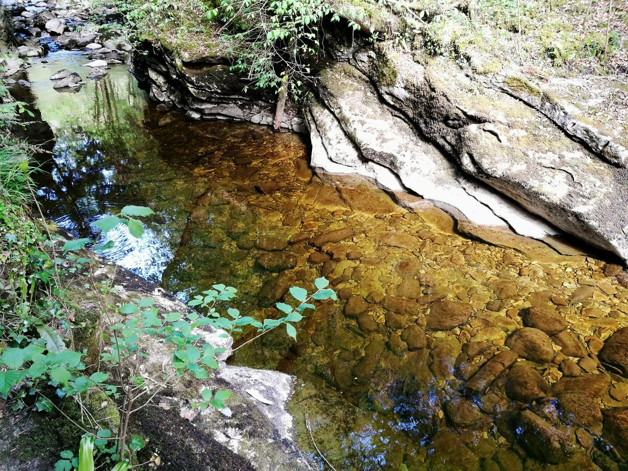 River View Water Reflections Freshness Spring Water Colorful Limestone Small River In Forest Beauty In Nature No People Outdoors Day High Angle View Yorkshire HuaweiP9