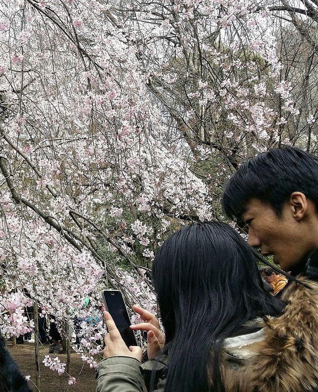 Cherry Blossoms Streetphotography Nature Naturelover Spring Edo Garden Tokyo Rikugien Garden 1695-1702 EyeEM Tokyo EyeEm Japan Eyeem Spring Eyeem Nature Eyeem Photography Eyeem Streetphotography