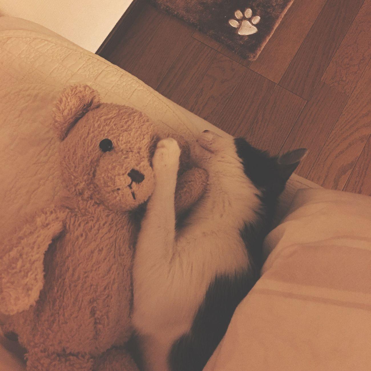 おやすみ 雨ちゃん 💤 ( ´艸`)
