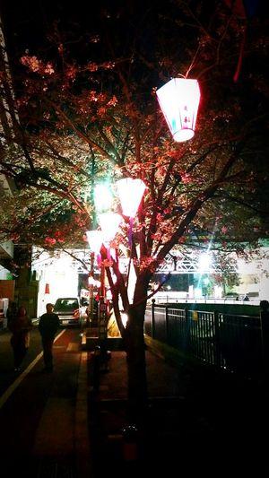 Tree Illuminated No People Indoors  Day Architecture