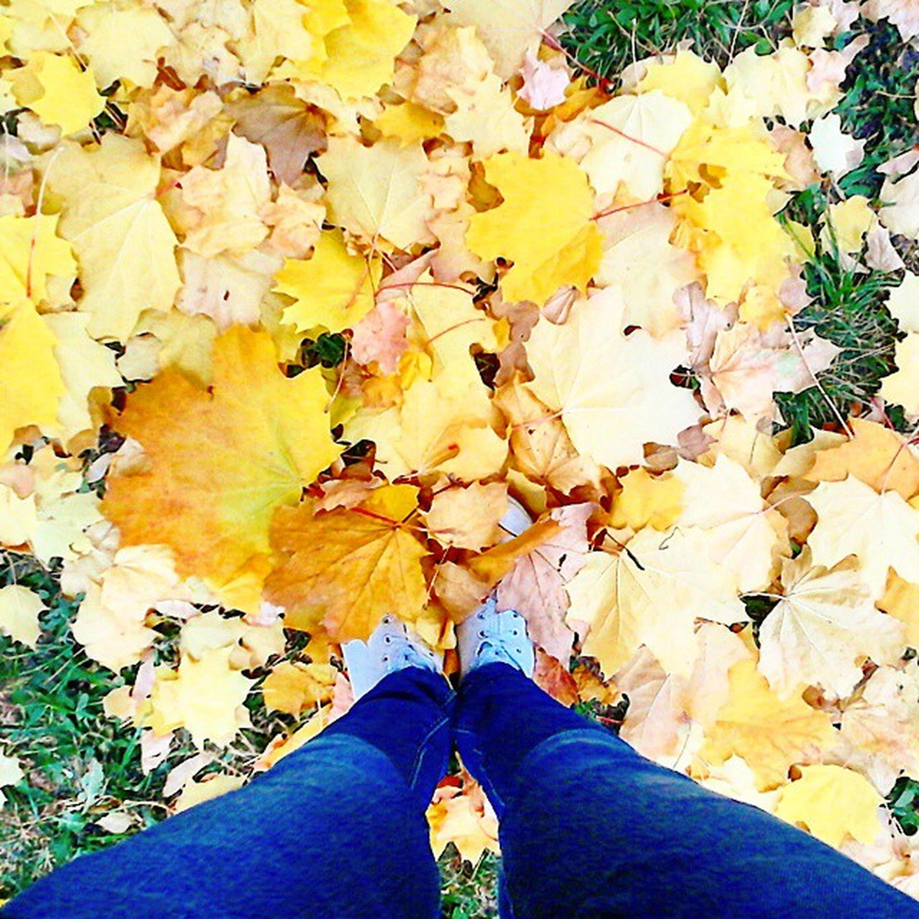 low section, person, personal perspective, leaf, autumn, lifestyles, change, men, leisure activity, unrecognizable person, standing, shoe, season, yellow, high angle view, nature