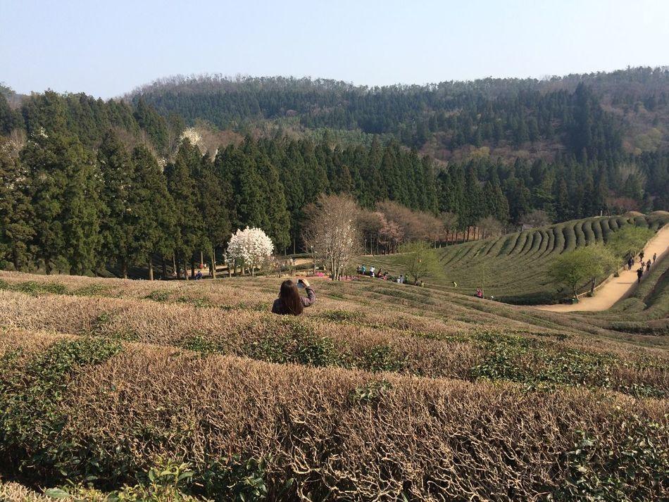 Greentea EyeEm Nature Lover South Korea Farm Boseong