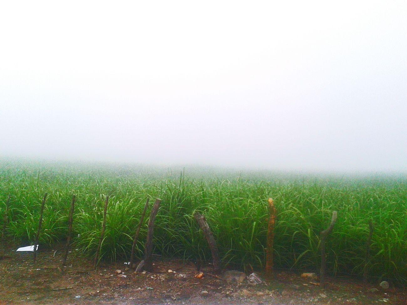 Es aquí cuando la naturaleza es hermos Neblina 😍🍃🌿☁