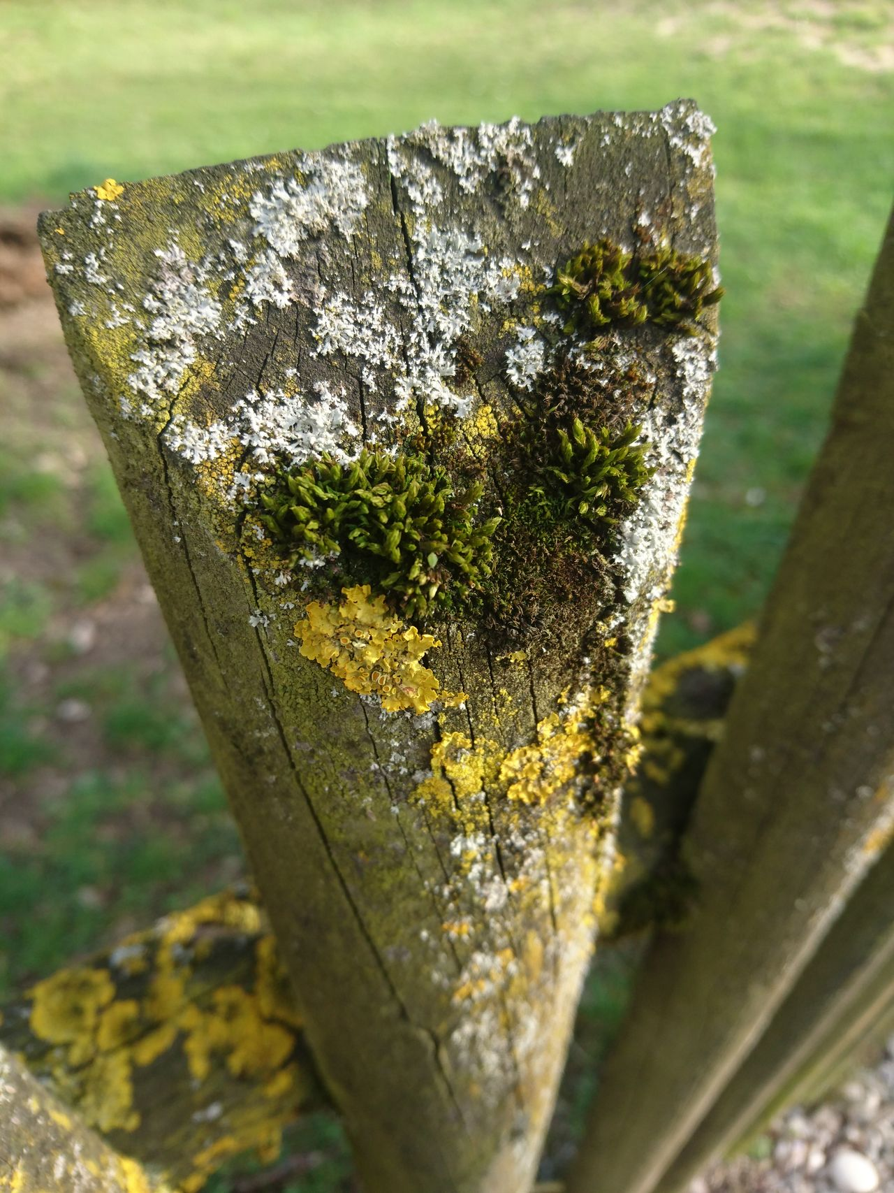 Nature No People Close-up Sunlight Focus On Foreground Outdoors Day Green Color Beauty In Nature Freshness Spring Backgrounds Wood - Material Fence Moss Moss & Lichen Moss-covered