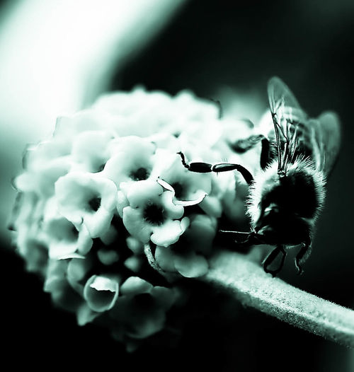 Sepia Green Tint Bee On Flower Nature Incredible Detail Natural Pattern Close-up Beauty In Nature Bee Drinking Pollen