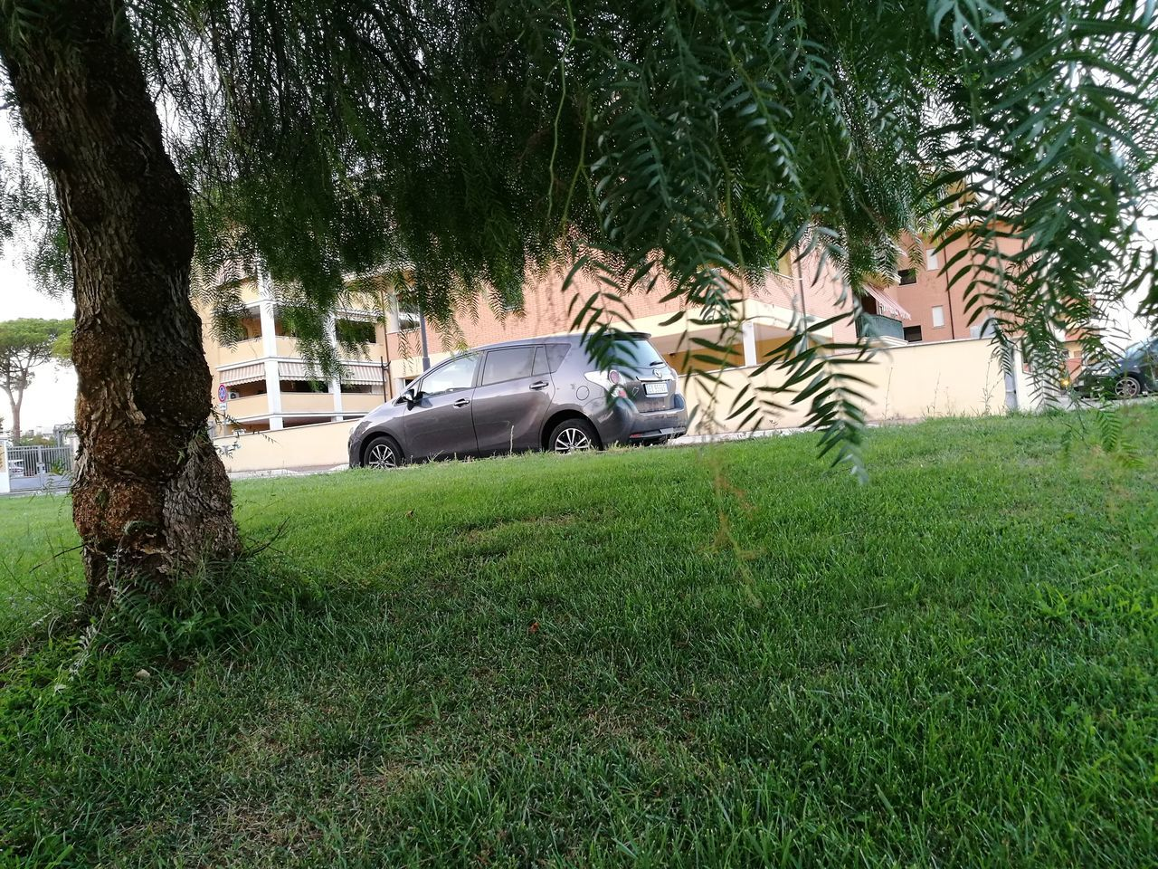 car, tree, grass, transportation, land vehicle, mode of transport, growth, day, green color, nature, no people, outdoors