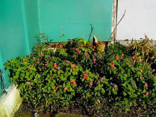 All About Flowers ...... Flowers, 🌷 Flowers 🌹 Flower Collection Bountiful And Fresh.......by rowena perez