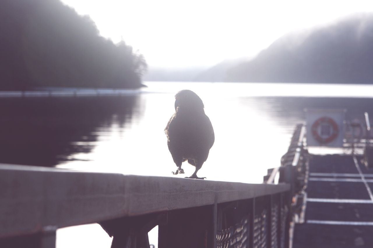 Hello World Parrot Cheese! Photo Of A Friend Milford Sound Unexpected Sympathy Backlit New Zealand Bird