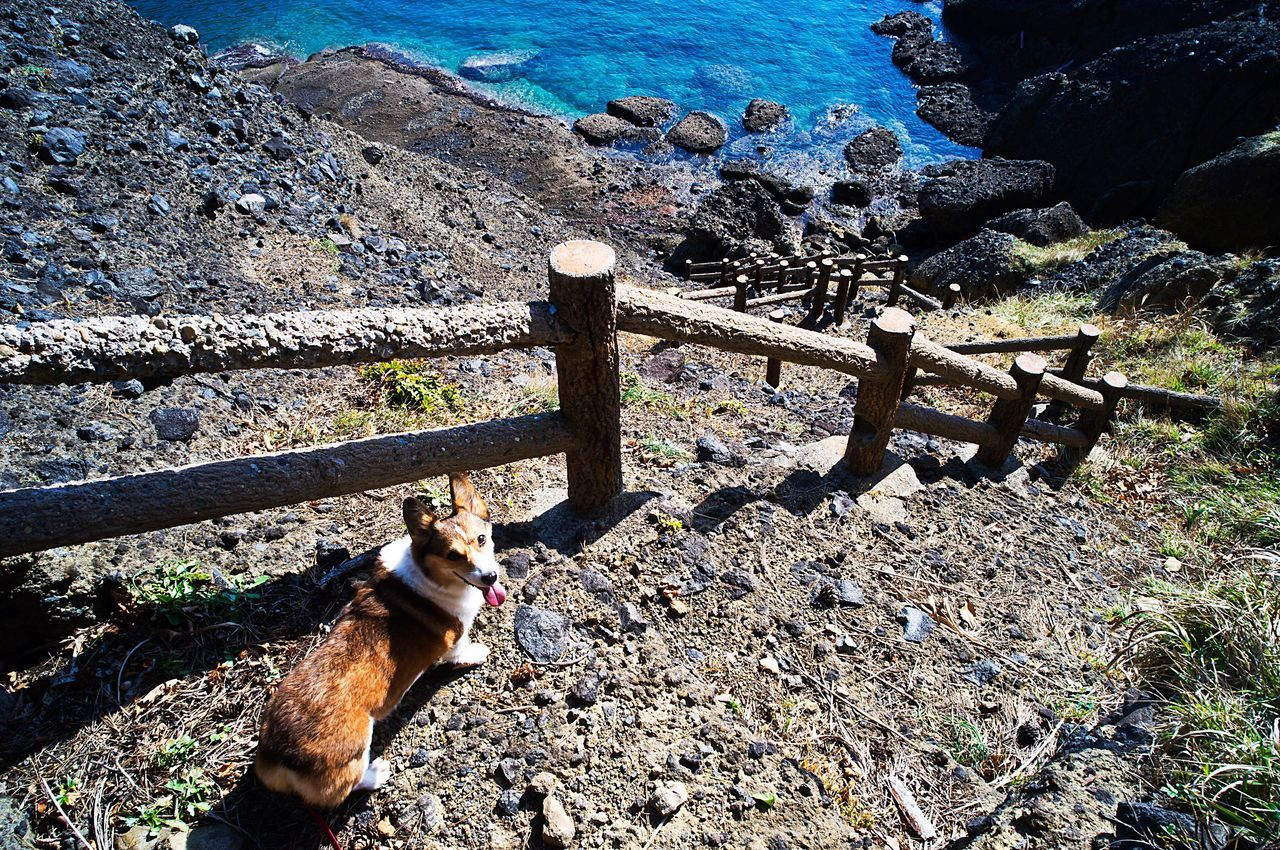 Dog Corgi Welsh Corgi Pochiko Cliff Slope Sea Rocky Beach Explorer Travel Jouney Far From Home Distant Places Memories Mementos Ricoh GXR Gxrmounta12 Super Angulon 21mm F/3.4 Aomori Japan