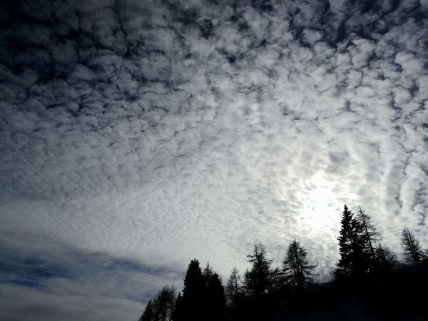 Tree Cloud - Sky Nature Sky No People Beauty In Nature Low Angle View Silhouette Outdoors Treetop Day Cloud Cloudy