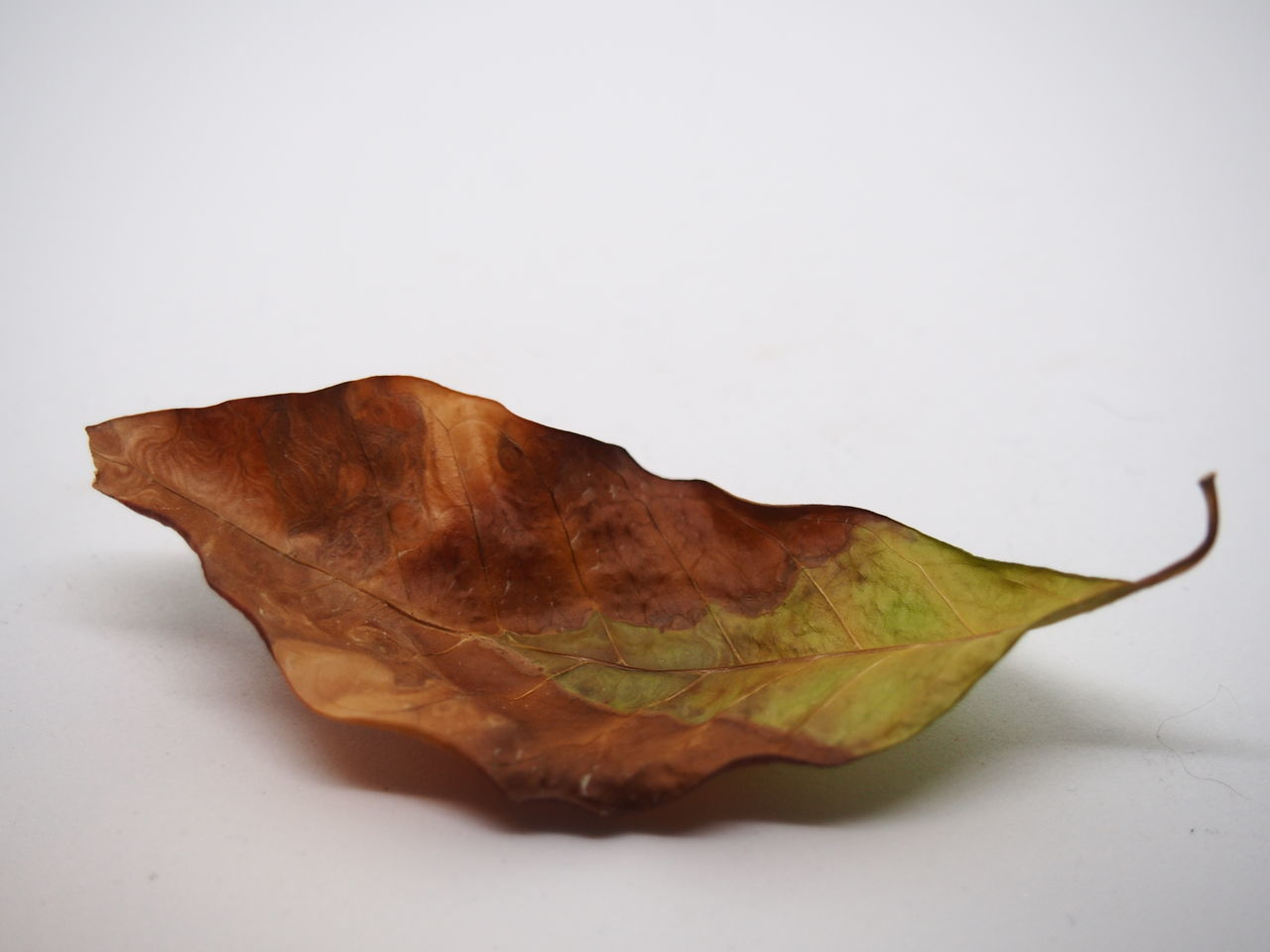 Close-up Crumpled Day Dried Fruit Dry Fragility Leaf Leaves No People Single Object Studio Photography Studio Shot White Background