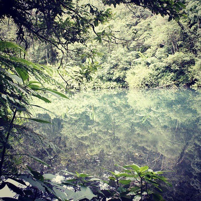 Kehidupan. Cibeureum Telagabiru Cibodasbotanicalgarden Gedepangrango jawabarat indonesia
