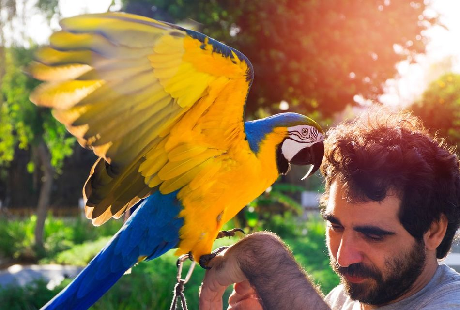 The man and the master. Parrot Macaw Headshot One Animal Yellow Young Adult One Person Men Bird Outdoors Animals In The Wild Adult Day Close-up People Flying High