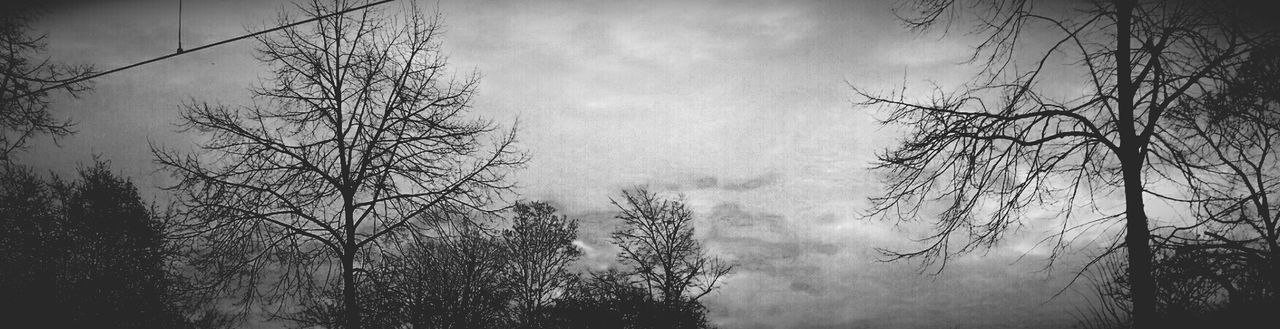 tree, bare tree, no people, nature, fog, day, branch, tranquility, outdoors, sky, growth, beauty in nature, landscape, hazy