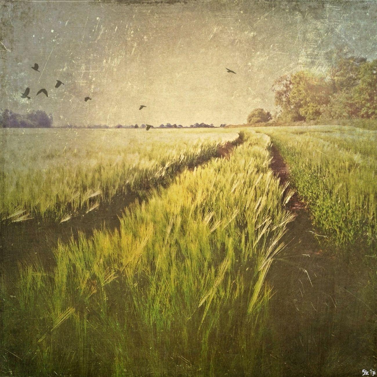 AMPt_community NEM Landscapes Mob Fiction NEM Painterly