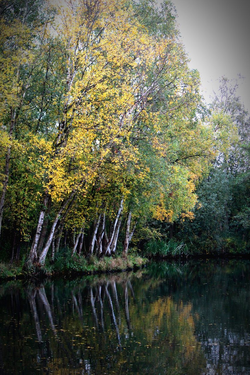 tree, nature, reflection, autumn, beauty in nature, tranquility, water, lake, tranquil scene, forest, no people, outdoors, scenics, growth, branch, day, sky