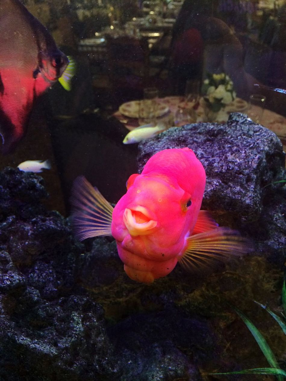 Fish Animal Themes Water Aquarium Nature One Animal Close-up No People