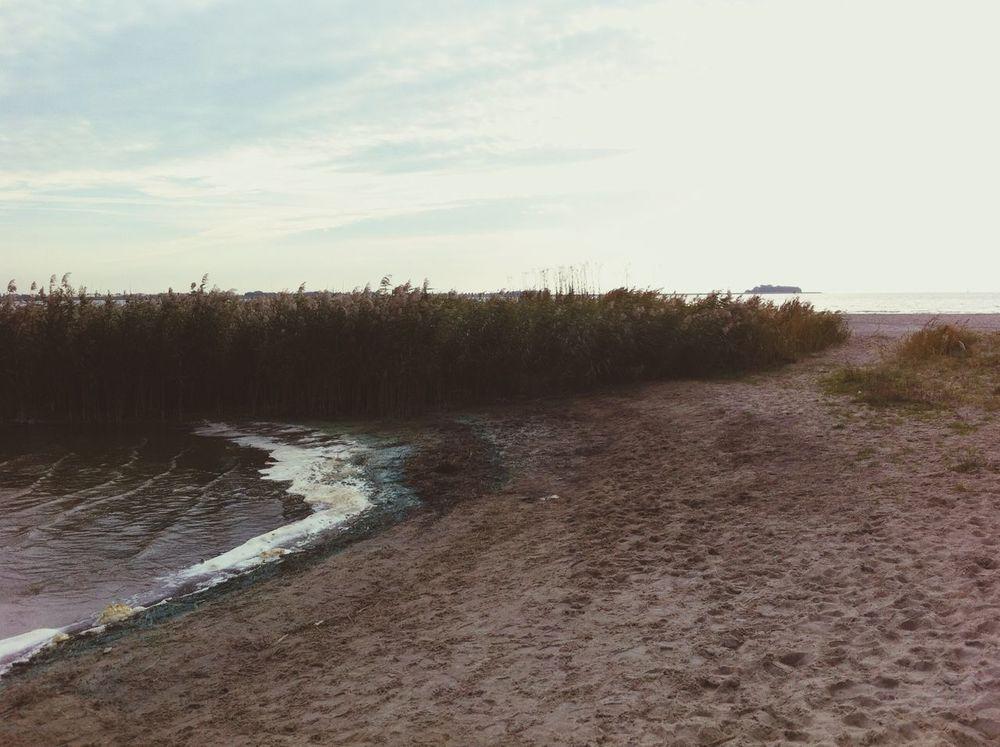 Beach Dog Walking Love