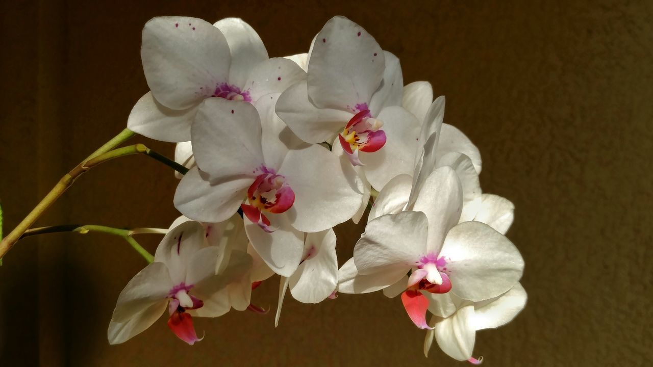 Orchids Collection Orchids Garden Light And Shadow Nature's Diversities Nature Multicolors