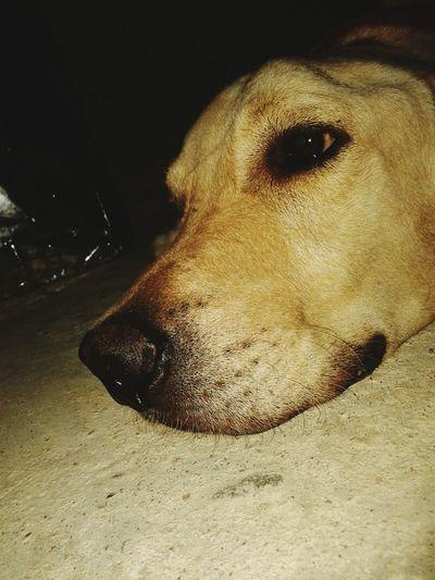 Dog Dog❤ Moments I Love My Dog Dog Moment Dog Thinking Of Life