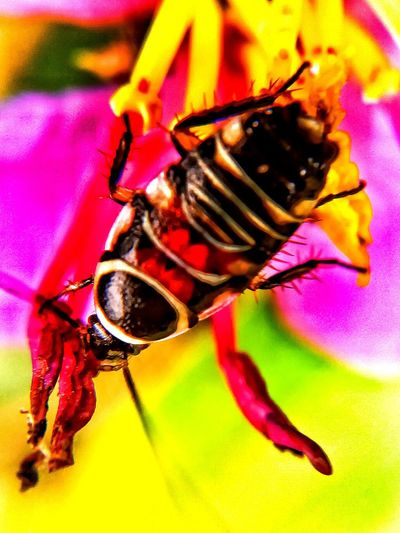 Tropical forest coachroach Insect Animals In The Wild Close-up One Animal Animal Wildlife Insect Theme Beauty In Nature Flower Background yellow pink and red No People Outdoors Day No Sky Macro Closedup