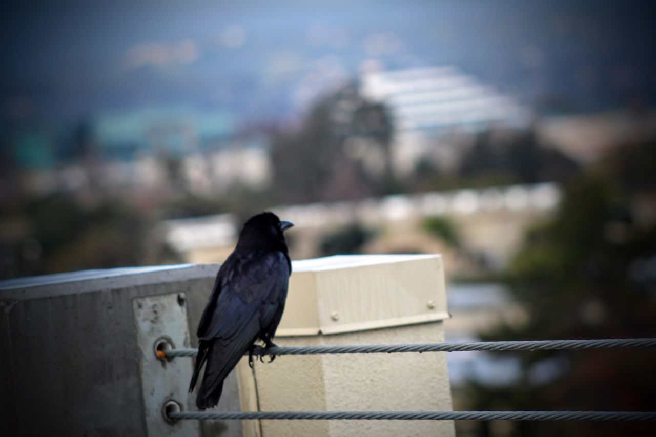 Watchers Of The City Birds Birds Of EyeEm  Birds_collection Bird Photography Bird